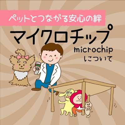 小島動物病院アニマルウェルネスセンター|マイクロチップについて