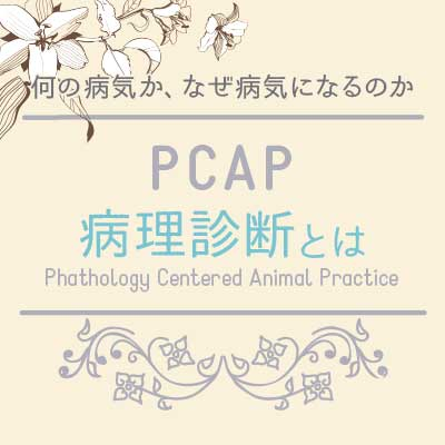 小島動物病院アニマルウェルネスセンター|PCAPについて