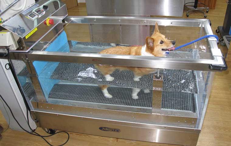 小島動物病院アニマルウェルネスセンター|リハビリテーション【水中トレッドミル】